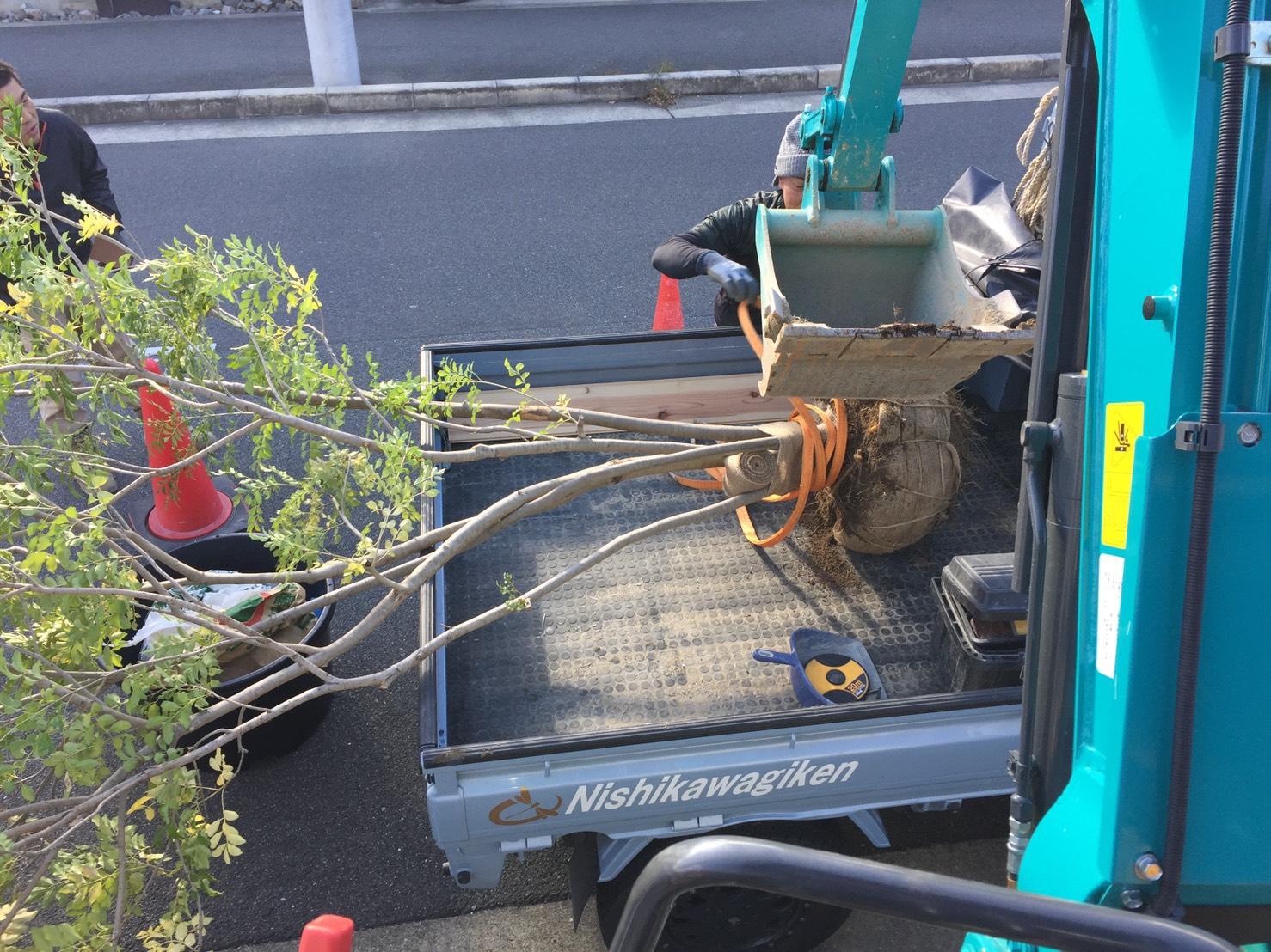 施工事例〔その他特殊工事〕木の移植工事